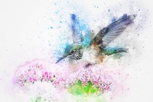 bird-2573779_960_720